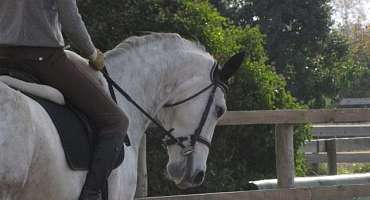 Horse riding - Lauris Equestrian Centre